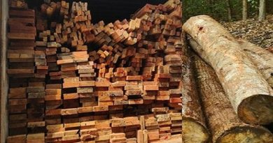 Polda Riau Amankan Kayu Ilegal Logging Dari Suaka Margasatwa Rimbang Baling